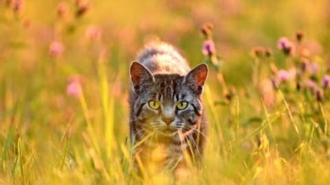 Estate e colpi di calore: ecco i consigli per i gatti – Sanihelp.it
