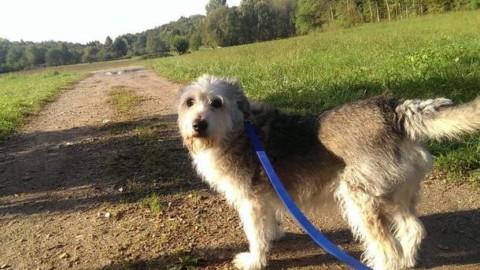Un'estate da cani: i consigli del veterinario – Varese News