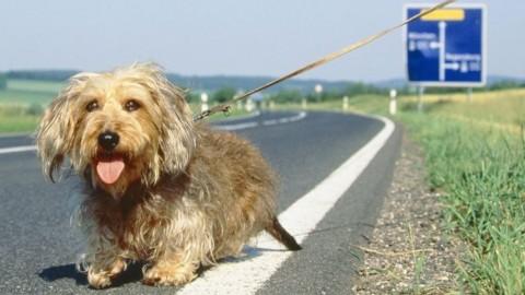 Guida sicura e abbandono dei cani, Anas in prima linea per … – Piacenza24