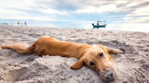 Estate, cani in spiaggia: cosa serve per proteggerli dai pericoli – www.amoreaquattrozampe.it (Blog)