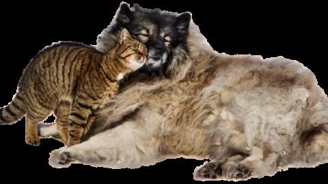 Cani e gatti, chi è più intelligente? Come scegliere il nostro amico a … – Vesuvio Live