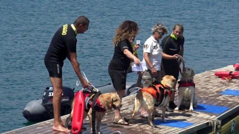 Soccorsi in mare: dimostrazione di salvataggio con i cani nelle … – LatinaToday