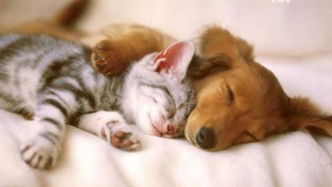 Quei like per cani e gatti che sui social oscurano le storie di umana … – Liberatv.ch