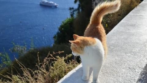 Vacanze col gatto? Ecco cosa fare – tio.ch