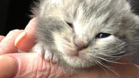 Un gatto che aveva perso i suoi fratelli ha trovato qualcuno da … – Il Secolo XIX