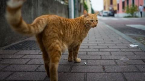 I luoghi dedicati al gatto nel mondo – Sanihelp.it