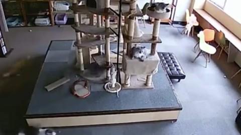 I gatti prevedono i terremoti: la conferma arriva da questo video … – Oggi