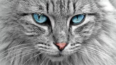 Gatti geneticamente modificati per persone allergiche: la nuova … – Scienze Fanpage