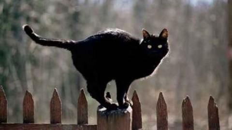 Gatto nero e specchi rotti: spiegato perché siamo superstiziosi – Affaritaliani.it