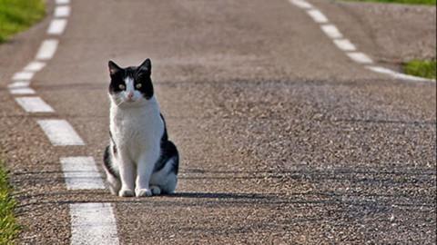 """Sarroch: gatto investito morto dopo 3 giorni di agonia. """"Perchè i vigili … – vistanet (Comunicati Stampa)"""