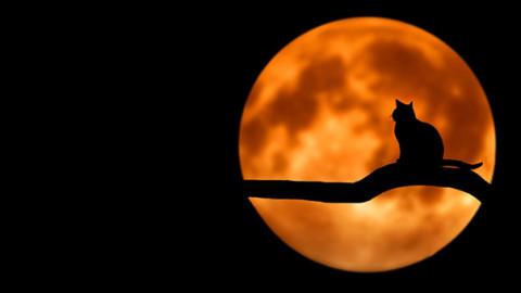 Eclissi di Luna: come comportarsi con cani e gatti? – GreenStyle