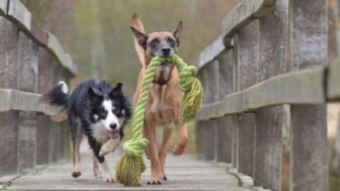 Cani: i comportamenti che odiano nell'uomo – GreenStyle