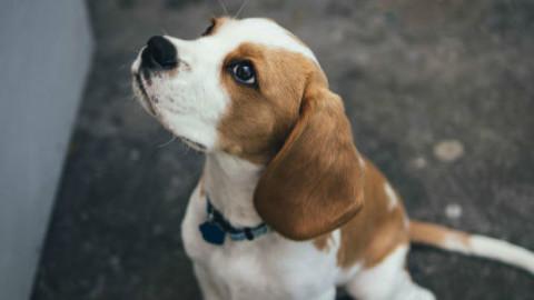 Cani: le razze più adatte per i bambini – GreenStyle