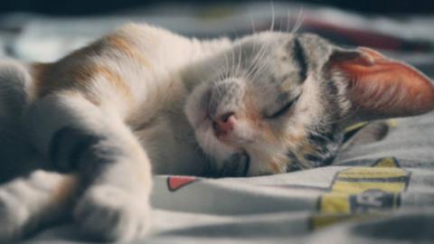 Gatti: una modifica genetica per i soggetti allergici – GreenStyle