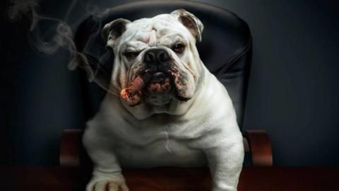 Gerarchia e dominanza nel cane domestico, verità o bufala? – Riviera24
