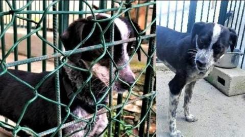 Adottare un cane dal canile, i consigli dell'educatrice cinofila – Riviera24