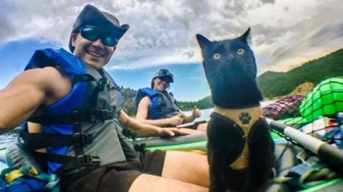 La meravigliosa storia di Simon, il gatto in viaggio per il mondo – DeAbyDay.it (Blog)