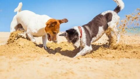 Spiagge per cani: dove andare? I consigli – La Nazione