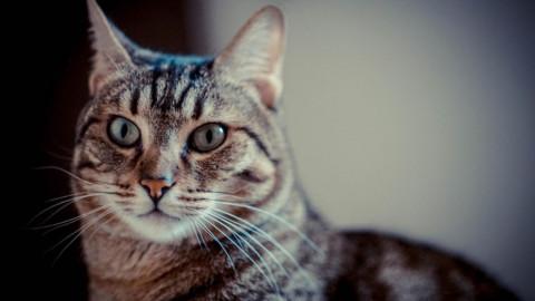"""Violenza sugli animali: la """"serial killer dei gatti"""" e le storie di cani … – LE IENE"""