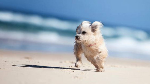 Cani in spiaggia: 10 consigli per una vacanza piacevole – Gazzetta di Parma