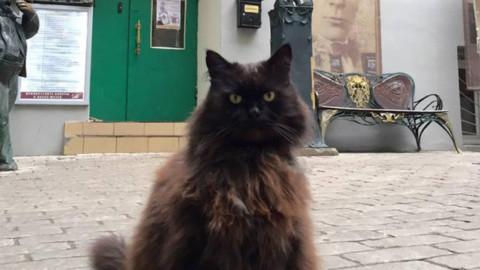 Misterioso rapimento del gatto Behemoth a Mosca, il micio del teatro-museo Bulgakov – Fidelity News