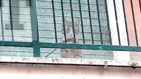Al guinzaglio sul balcone: gatto salvato a Roma – Fidelity News