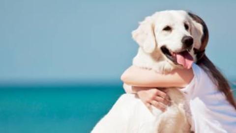 Hai animali domestici? Avrai successo nella vita – il Giornale