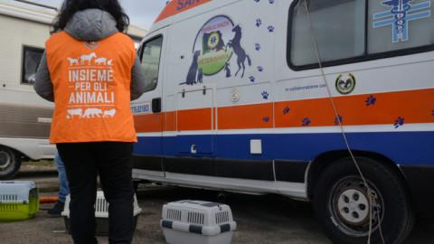 Soccorso stradale animali, prima indagine LAV. Chiediamo un numero unico per le emergenze