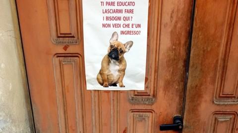 Bisogni sui marciapiedi, quando il cane sgrida il padrone: a Milano … – La Repubblica