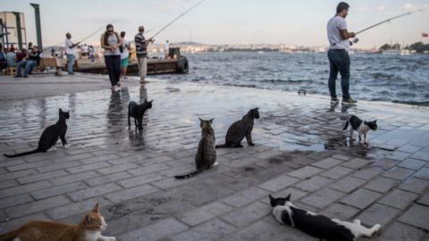 Istanbul, la città dei gatti. FOTO – Sky Tg24