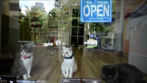 """""""Catzonia"""", la prima pensione di lusso per gatti in Malaysia – Affaritaliani.it"""