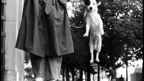 Giornata cane: a Treviso Fido celebrato da Elliott Erwitt – ANSA.it