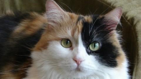 Tre sfumature di gatta: un'estate con Petrarca – AgoraVox Italia