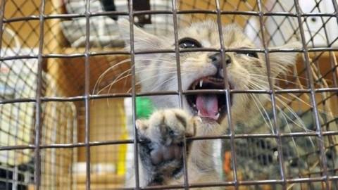 SAN GIORGIO – Vendono la casa e lasciano il gatto dentro… – QC QuotidianoCanavese
