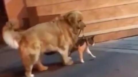 Il gatto è pronto per la rissa, ma il cane lo porta via ed evita la zuffa – La Stampa