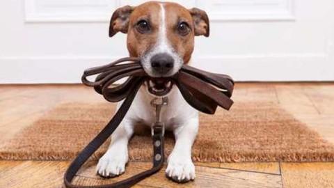 Animali e condominio: regole e obblighi da rispettare – Il Messaggero