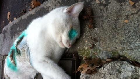 Killer di gatti: avrebbe ucciso i cuccioli picchiandoli selvaggiamente … – MilanoToday