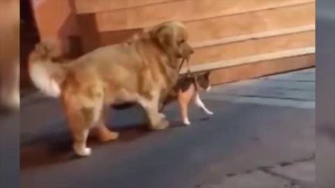 Cina, il gatto sta per azzuffarsi: cane lo trascina via ed evita la 'rissa' – La Repubblica