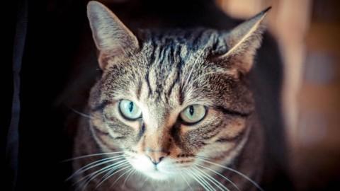 E' la giornata del gatto, Micio spopola sui social – ANSA.it