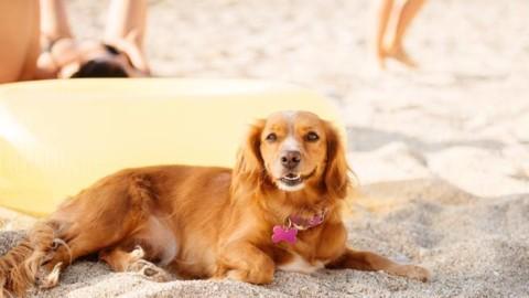 Le regole per i cani in spiaggia: sempre al guinzaglio ma possono … – Corriere della Sera