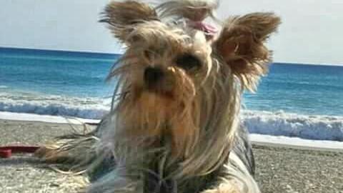 Camogli: Premio Fedeltà del cane di San Rocco, le storie ei premiati – Levante News