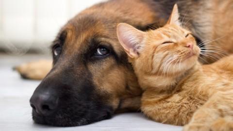 Più intelligente il cane o il gatto? Gli esperti dicono che… – SiciliaInformazioni.com