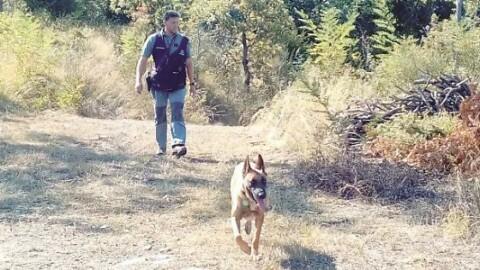 Cane da caccia avvelenato, a Sant'Agata Feltria arrivano i cani anti … – Corriere Romagna