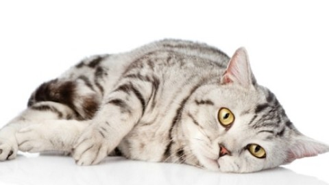 Cosa fare quando il gatto vomita sangue – MarsalaOggi.it