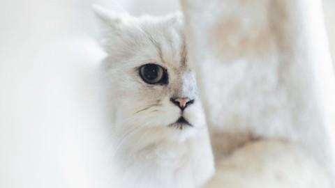 Amante dei gatti? Hai già installato una gattaiola? Ecco tutto quello … – Moondo (Blog)