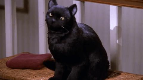 Gatti: I sovrani dell'Internet – DR COMMODORE (Blog)