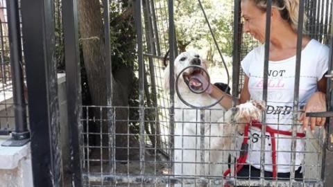 Cani e gatti sotto sgombero al canile del Termine: adottateli – Corriere Fiorentino