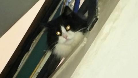Minori non è un paese per gatti: EXCUSAZIO NON PETITA … – Positanonews