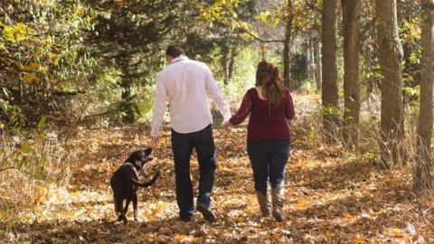 Al mare e in montagna col cane: cosa fare per il benessere del … – BergamoNews.it