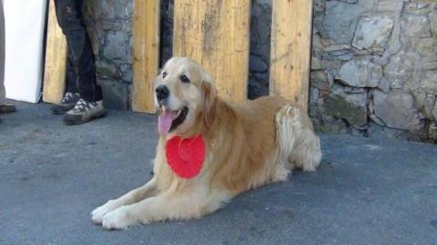 Cani, campioni di affetto e coraggio: a San Rocco torna il premio … – Genova24.it